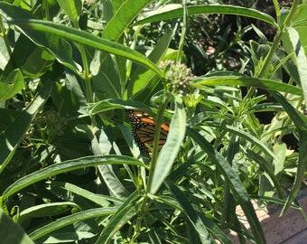 "California-Native ""Monarch Munch"" Milkweed Mix Seedbark"