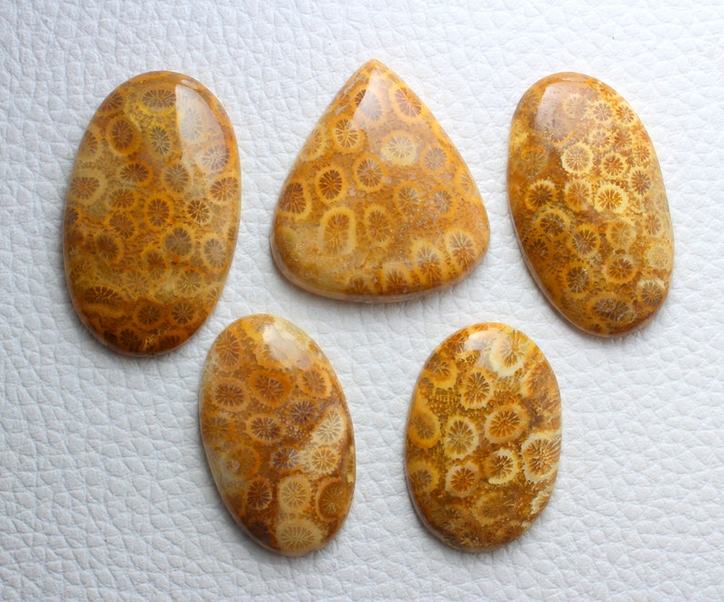 5 Pieces Lot Superb Quality Natural Fossil Coral Smooth Cabochon Mix Shape 34x23mm To 42x26mm Approx with Wholesaler Price.