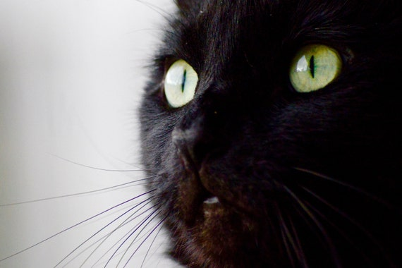 Beautiful Black Cat Green Eyes Close Up Photo Art Wall Metal Etsy