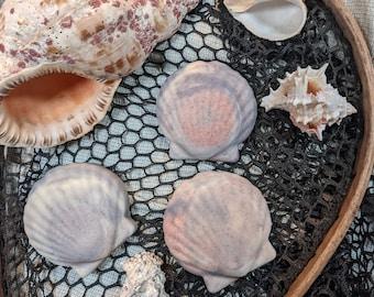 Sea Salt Soap - Salty Shells
