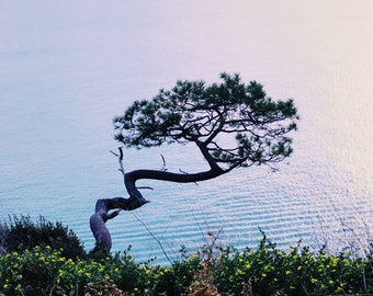 Lone Tree Over The Bay