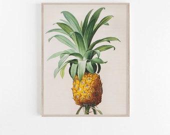 Pineapple Botanical Island Tropical Tommy Bahama Style - Digital Image - Vintage Art Illustration