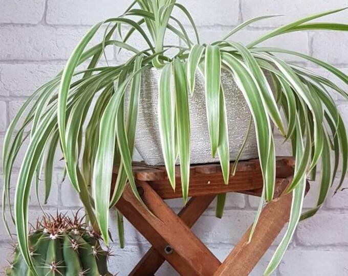 Wooden plant door