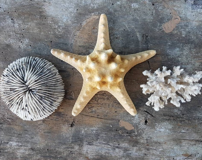 Corals, starfish