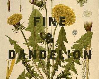 Fine And Dandelion-- Midnight Green-- Botanical Print