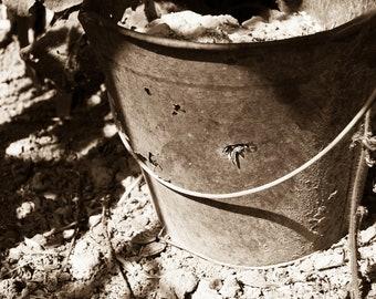 Old Metal Bucket Photograph