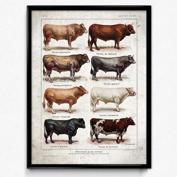 2 Print Cow No