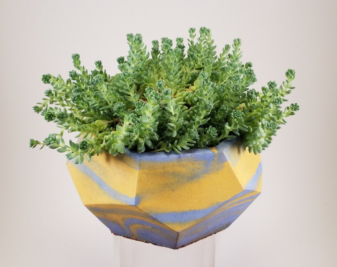 "Geometric Hand Cast Concrete Planter (4"") with Sedum dasyphyllum major"