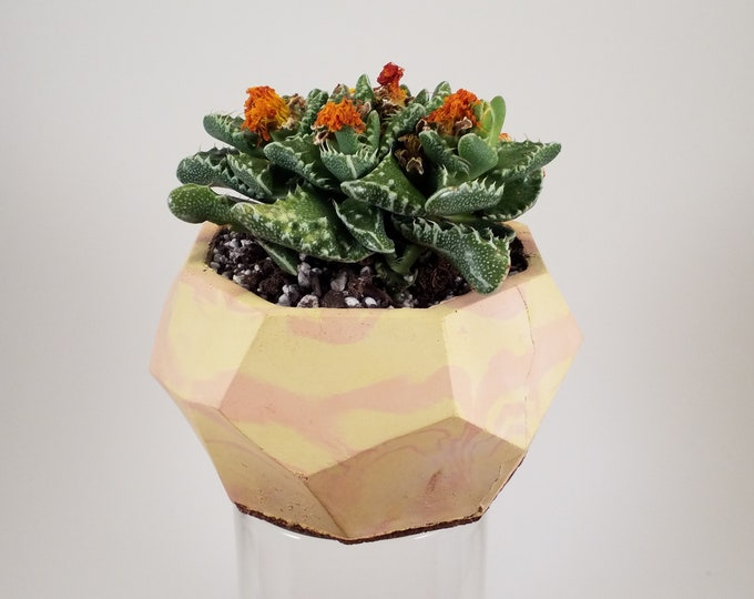 "Geometric Hand Cast Concrete Planter (4"") with Tiger Jaws (Faucaria tigrina)"