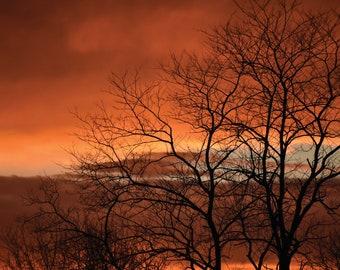 Orange Sky Tree Digital Print