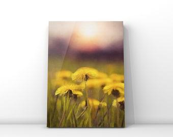 Field of Dandelions *Digital Download*