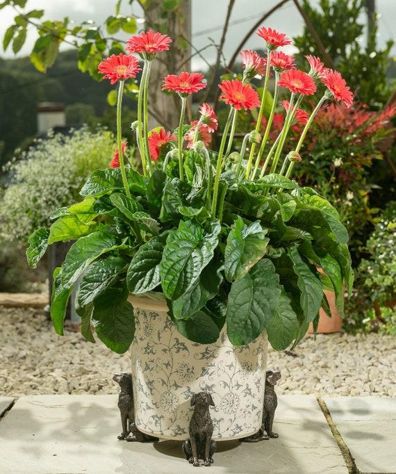Potty Feet Planter Risers Yard Art Set of 3 Plant Pot Feet Bronze Retriever
