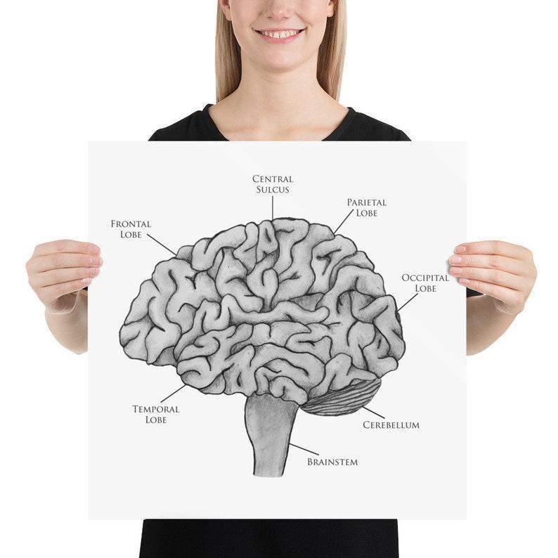Unlabeled Printable Blank Brain Diagram - Aflam-Neeeak