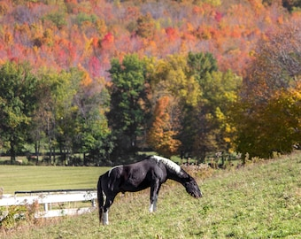 New England Photography - Horse in a Field - Dorset Hollow, Vermont