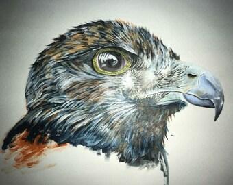 Acrylic Juvenile Buzzard Eagle