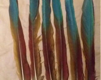 Military Macaw Feathers