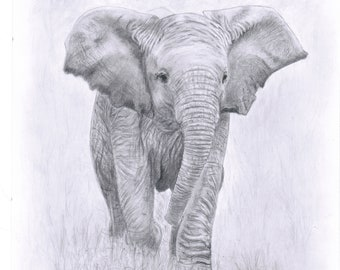 Custom 100% hand drawn pencil sketch of pet or animal from your photo