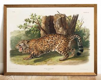 1cdce44570e Jaguar print
