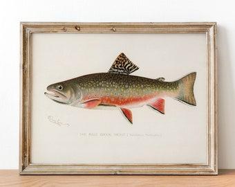 500114e7e16c Male Brook Trout Fish Print