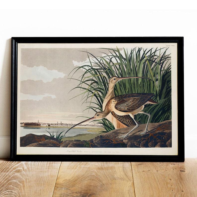 Vintage style quality art print POSTER.Pelikan Hands.Room Art Decoration.793