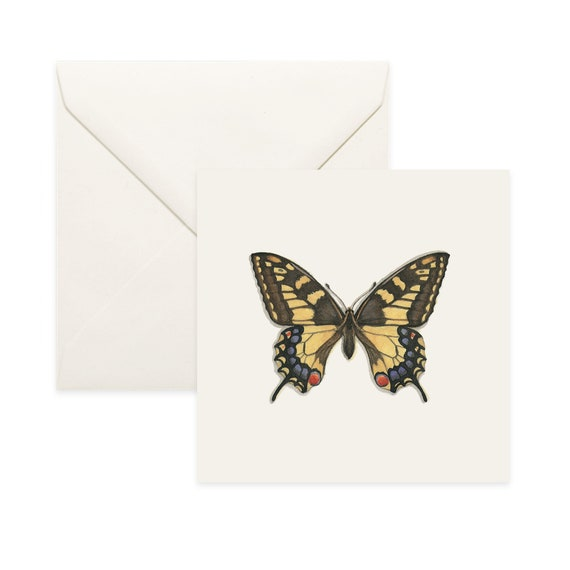 Common Opal  Notecard  Thank You Card  Message Card  Birthday Card  Nature Illustration  Butterfly  Insect  Insects Butterflies