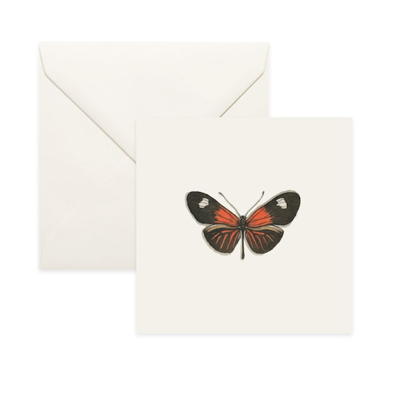 Insect Invertebrates Blank Square Greetings Card Birthday Thank you Notecard