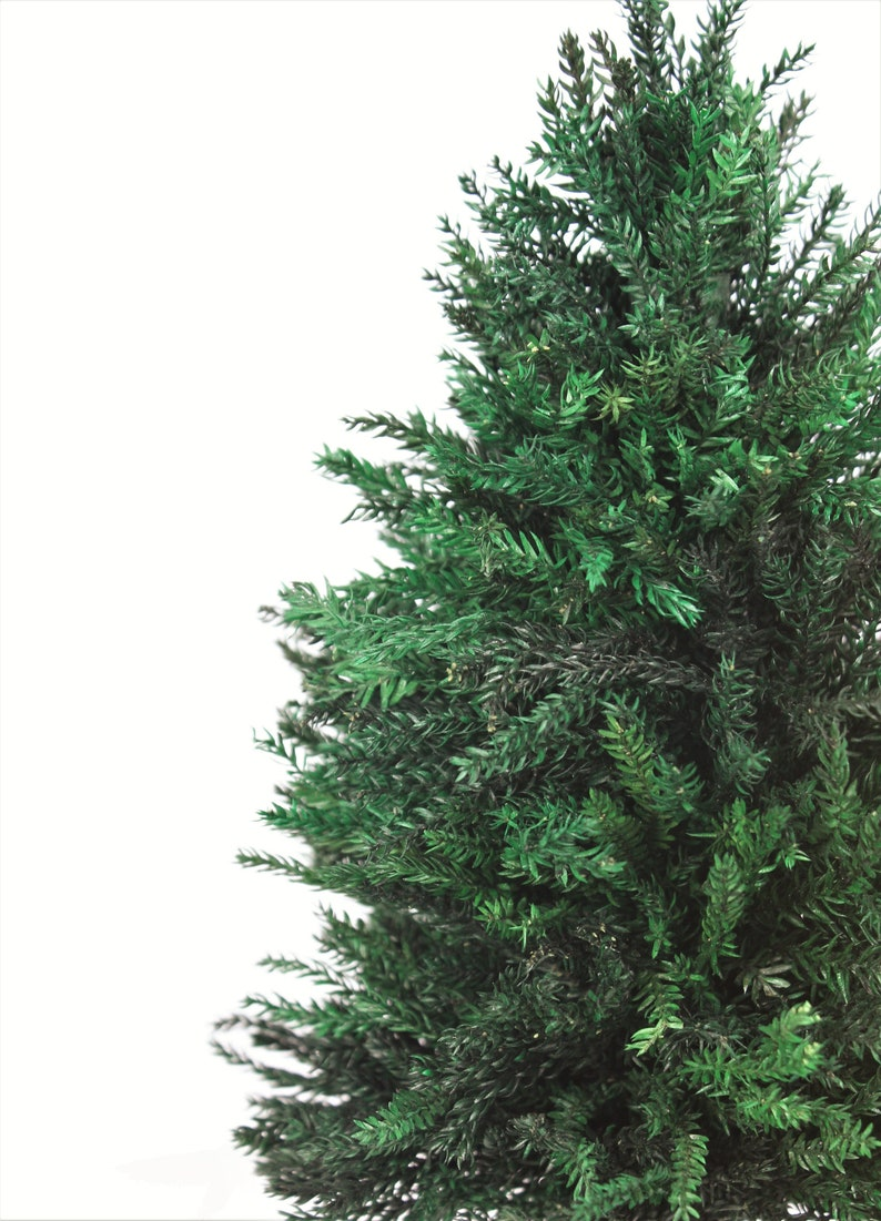 How Often To Water Christmas Tree.A Real No Water Needed 7 Inch Christmas Tree For Dollhouse Or Village Made From Real Miniature Preserved Pine No Maintenance