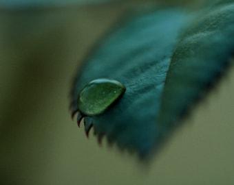 Artistic Macro Leaf Water Droplet Canvas Print