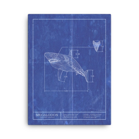 Megalodon Schematic Art Print  5x7, 8x10 poster with free shipping  Unique  shark themed artwork for children's bedrooms