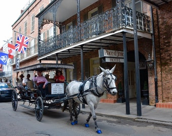 New Orleans Place D'Armes Hotel with Carriage 8x8 Canvas