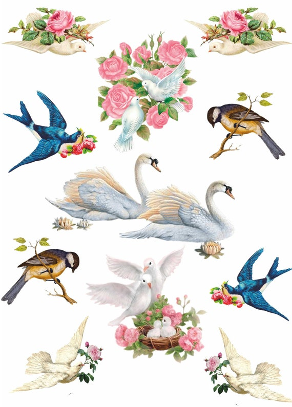 Scrapbooking Rice Paper for Decoupage Sheet Craft Vintage Parrots Family