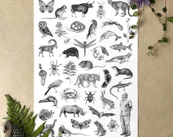 A4 Sir David Attenborough & Animals Illustrated Poster/Print