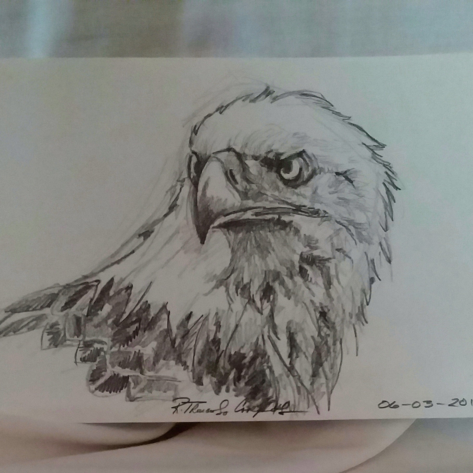 Eagle bald eagle american eagle pencil drawing original