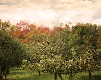 Orchard || McKee Photography || Trees || Cloudy || Fall