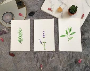 Bundle Hand Painted Original Watercolor of Herbs