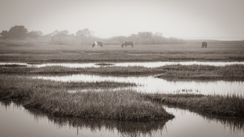 Assateague Island Ponies in the Mist Black and White Digital File