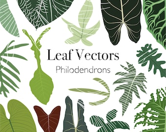 Vector pack - 24 exotic philodendron leaf illustrations PNG SVG EPS