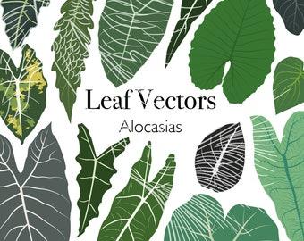 Vector pack - 14 alocasias leaf illustrations PNG SVG EPS