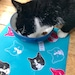 heatherlwg reviewed FEED ME – Pet Food Mat
