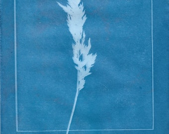 Nature Cyanotype