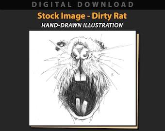 Dirty Rat stock image