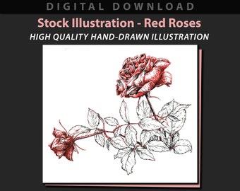 Red Roses stock illustration