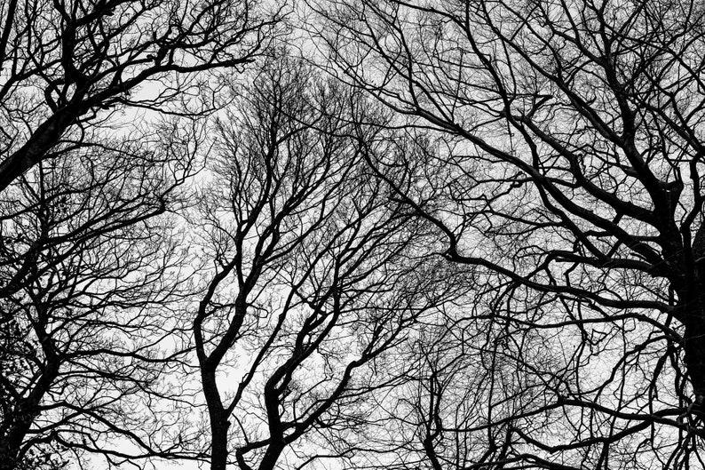 3315e12021 Silhouettes National Park Silhouette Scene black and white