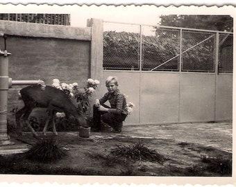 Vintage Photo Boy and Roe Deer 1967