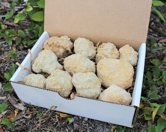 Break Your Own Geodes Gift Box (9 - 12 pcs) Large Unopened Moroccan Crystal Quartz Geodes