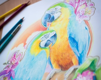 Blue-and-yellow Macaws & Alstroemeria