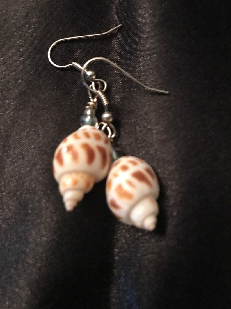 Areola seashell earrings beach earrings beach jewelry tropical earrings tropical jewelry areola shell earrings
