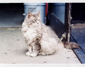 Color print — Cat in the streets of NY