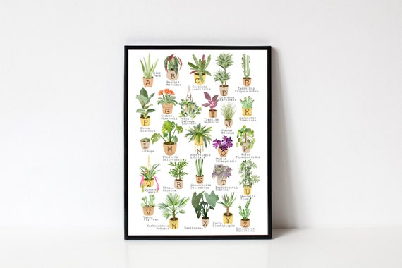 House Plants Alphabet / A to Z / Popular House Plant Species / Home Decor / Home Jungle / Rare Plants / Illustrated by Aimee