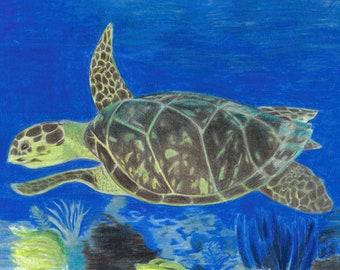 Colored Pencil Sea Turtle Print